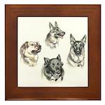 Bum Sniffing Dogs Framed Tile