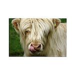 White Highland Cow Magnet
