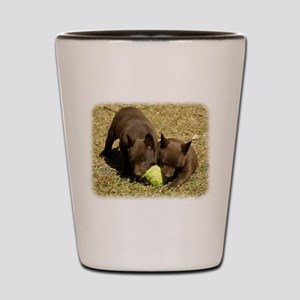 Australian Kelpie 9P022D-018 Shot Glass