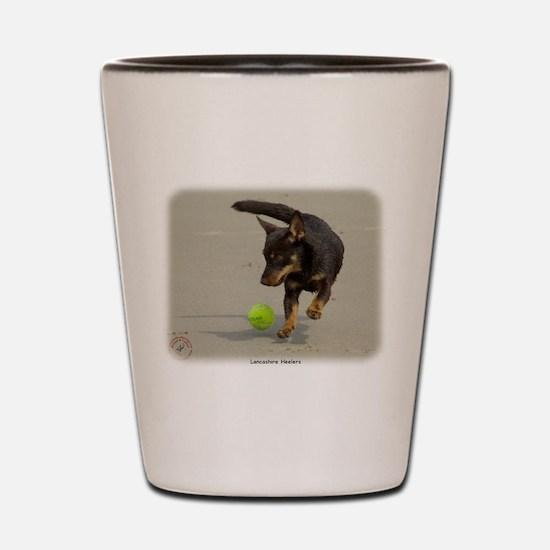 Lancashire Heeler 9R056D-248 Shot Glass