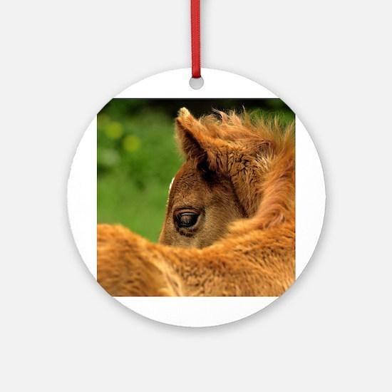 Fuzzy Baby Horse Ornament (Round)