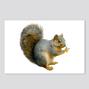 Peace Squirrel Postcards (Package of 8)