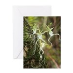 Ghost Orchid Card Greeting Cards
