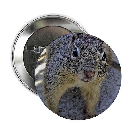 """Ground Squirrel 2.25"""" Button (100 pack)"""