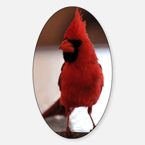 Red Cardinal Sticker (Oval)