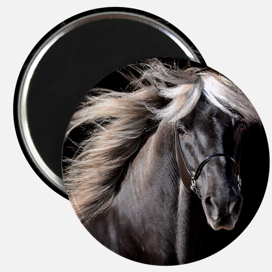 Chocolate Rocky Mtn Horse Magnet