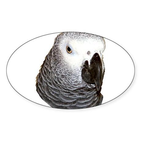 Congo African Grey Oval Sticker