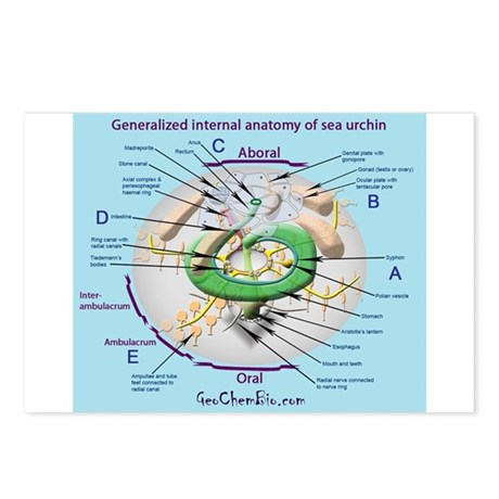 Sea urchin anatomy Postcards (Package of 8) by GeoChemBio