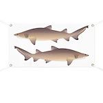 Sand Tiger Shark Banner