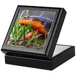 Salamander Newt Keepsake Box