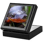 Salamander Newt Face Keepsake Box