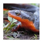 Salamander Newt Tile Coaster