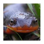 Salamander Newt Face Tile Coaster