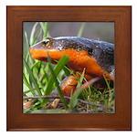 Salamander Newt Framed Tile