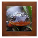 Salamander Newt Face Framed Tile