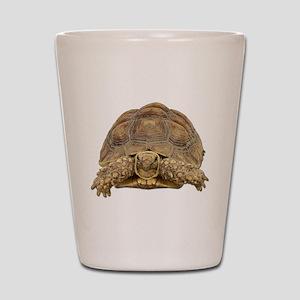 Tortoise Photo Shot Glass