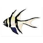 Banggai cardinalfish 5x7 Flat Cards (Set of 20)