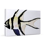 Banggai cardinalfish 20x30 Canvas Print
