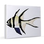 Banggai cardinalfish 20x24 Canvas Print