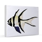 Banggai cardinalfish 16x20 Canvas Print