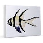 Banggai cardinalfish 8x10 Canvas Print