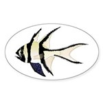 Banggai cardinalfish Sticker