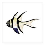 Banggai cardinalfish Square Car Magnet 3