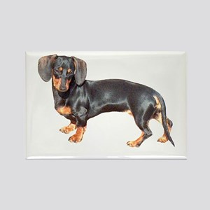 Lily Baby Dachshund Dog Rectangle Magnet