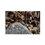 Northern Fence Lizard Rectangle Magnet