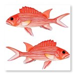 Hawaiian Squirrelfish Photo Wall Tile