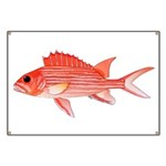 Hawaiian Squirrelfish Banner