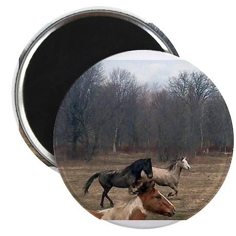Hagan's Horses Magnet