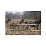Hagan's Horses Rectangle Magnet (10 pack)