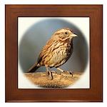 Song Sparrow Framed Tile