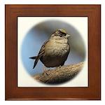 Golden-Crowned Sparrow Framed Tile