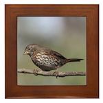 Fox Sparrow Framed Tile