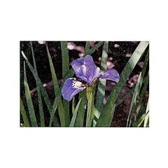 Siberian Iris Rectangle Magnet