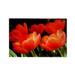 Red Singing Tulips - Rectangle Magnet