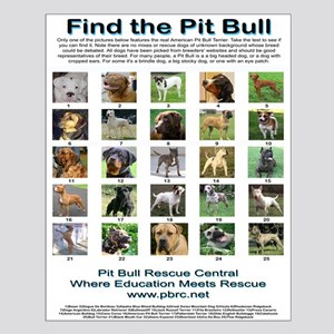 Find the Pit Bull Small Poster