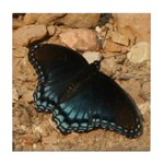 Red-Spotted Purple Tile Coaster