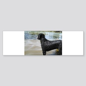 Portuguese Water Dog Sticker (Bumper)