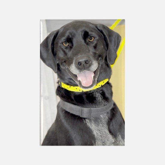 Black Lab/Pointer Photo Rectangle Magnet