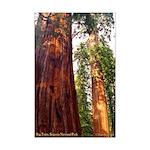 Big Trees Sequoia Nat. Park--mini poster