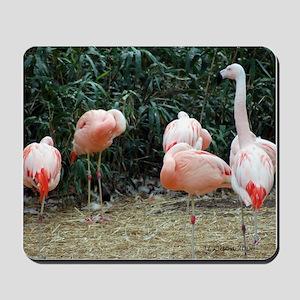 Mousepad - Flamingo