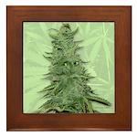 Green Bob Framed Tile
