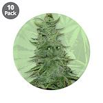"""Green Bob 3.5"""" Button (10 pack)"""