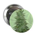 """Green Bob 2.25"""" Button"""