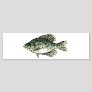 Black Crappie Fish Bumper Sticker