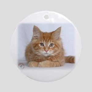 Maine Coon Kitten 9Y226D-373a Ornament (Round)