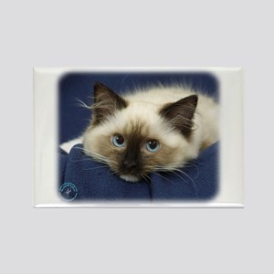 Ragdoll Cat 9W082D-020 Rectangle Magnet